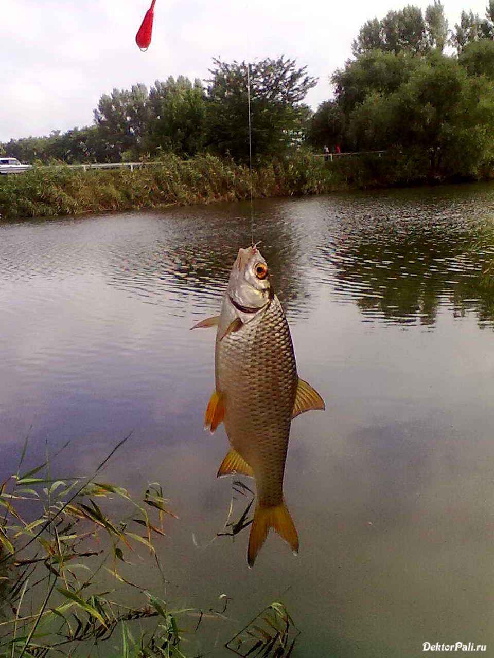рыбалка на базе кочеты